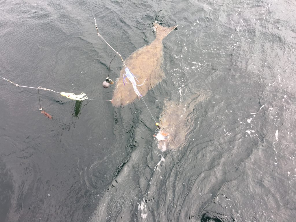 Saltwater Halibut FIshing Charter
